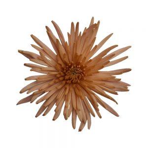 Anastasia bronze flower