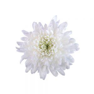 Chita flower