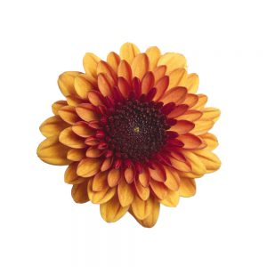 Lexy flower