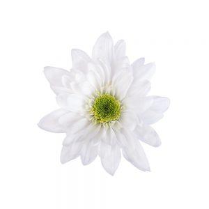 Monalisa flower