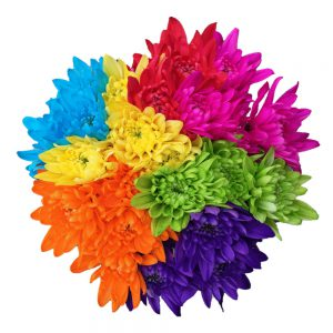 Neon cushion flowers