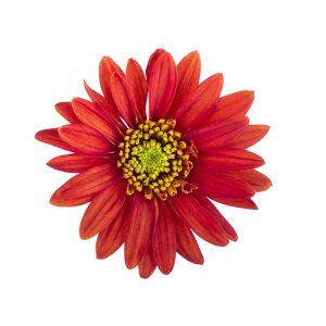 Orange bradford flower