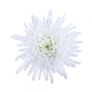 Yazoo flower