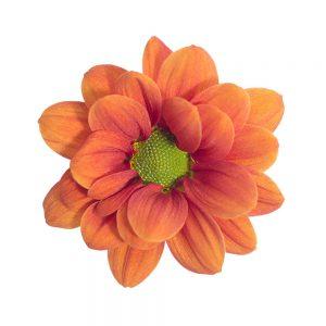 Orange Managua flower