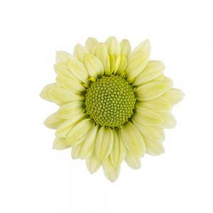 Trebol flower