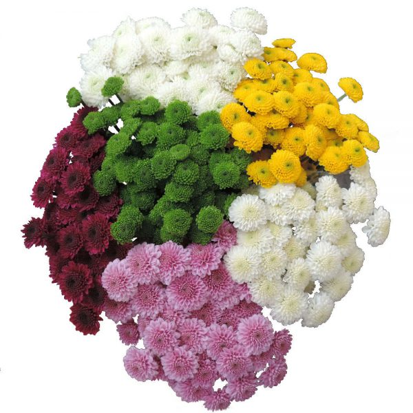bunch of button flowers
