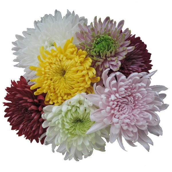 bunch of cremon flowers