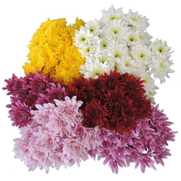 bunch of cushion flowers