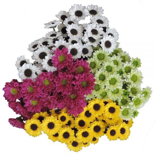 bunch of santini flowers