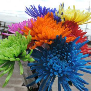 tinted flowers fujis